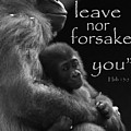 I Will Not Leave Nor Forsake You by T A Davies