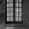 Iberville Shadows  by Lynn Terry