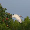 Ibis In The Oleander by Deborah Benoit