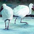 Ibis by Linda Speaker