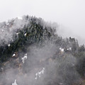Ice And Fog On The Ridge by Robert Potts