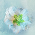 Ice Blue Under by Terry Davis
