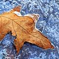 Ice-bound Leaf by Carolyn Derstine
