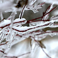 Ice Branches by Corey Ford