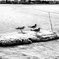 Ice Crew On Long Beach Island by John Rizzuto