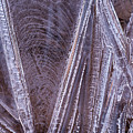 Ice Dance by Deborah Hughes