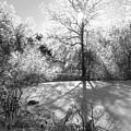 Ice Palace by Garth Glazier