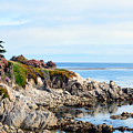 Ice Plant Along The Monterey Shore 2 by Barbara Snyder