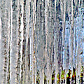 Ice Sickle Curtains by Don Baker