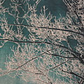 Ice Storm Branches - Blue by Michelle Miron-Rebbe