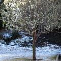 Ice Tree by Amy Hosp