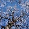 Ice Tree Blue Sky by Paul Rebmann