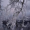 Ice Trees by Hugh Smith