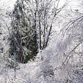 Ice Wonderland by David Jenniskens