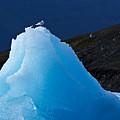 Iceberg by Chlaus Loetscher