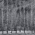 Iceland Landscape # 10 by Allen Beatty