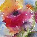Iceland Poppy by Anne Duke
