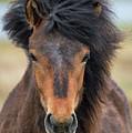 Icelandic Equine Beauty.. by Nina Stavlund