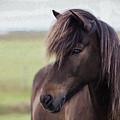 Icelandic Horse by Patti Schulze