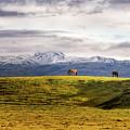 Icelandic Horses On The Countryside  by Joseph Howard