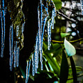 Icicles 3 by Dan Ketelsen