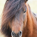 Iclelandic Horse Close Up by Jerry Fornarotto