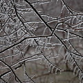 Icy Branches by Kathy Carlson