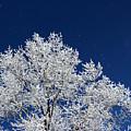 Icy Brilliance by Arizona  Lowe