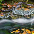 Icy Foliage Stream by Chris Whiton