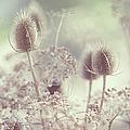 Icy Morning. Wild Grass by Jenny Rainbow