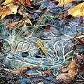 Icy Patterns by Kerri Farley