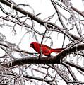 Icy Perch by Debbie Oppermann