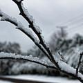 Icy by Roberta Byram