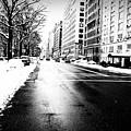Icy Snow by Ariane Moshayedi