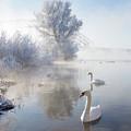 Icy Swan Lake by E.M. van Nuil