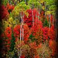 Idaho Autumn T-shirt by Greg Norrell