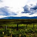 Idaho Field by Angus Hooper Iii