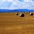 Idaho Hay by Marty Koch