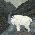 Idaho Mountain Goat by Sara Stevenson