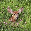 Id'st Hiding In The Flowers by Kevin Cox