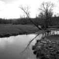 Idyllic Creek - Black And White by Angela Rath