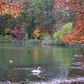 An Idyllic Autumn by Dora Sofia Caputo Photographic Design and Fine Art