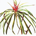 Ieie Plant Art by Hawaiian Legacy Archive - Printscapes