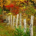 If I Could Paint No 1 - New England Fall Fence by Jon Holiday