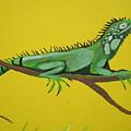 Iguana by Anthony Schafer