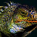 Iguana by David Lee Thompson