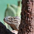 Iguana Head by Tom Dowd