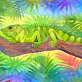 Iguana by Jennifer Baird