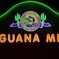 Iguana Mia by Don Columbus