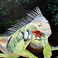 Iguana Midnight Snack by Susan Kubes